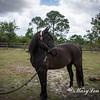 horsesofwedgfield-0997
