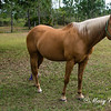 horsesofwedgfield-1196