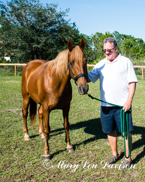 horsesofwedgfield-2178