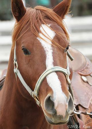 Ranch Horse Versatility Day - Jan. 14, 2012