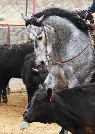 Ranch Horse Versatility - March 31-April 1, 2012