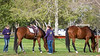 2018_March24_TBClassicHS-8180
