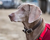 2018_March24_TBClassicHS-8113