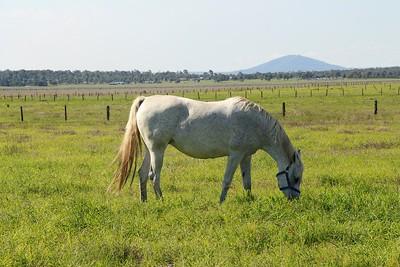 Daniifahh a few weeks after foaling in October 2017.