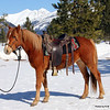 ~Soafy~ Mare Morgan Haflinger Cross 2010<br /> FOR SALE