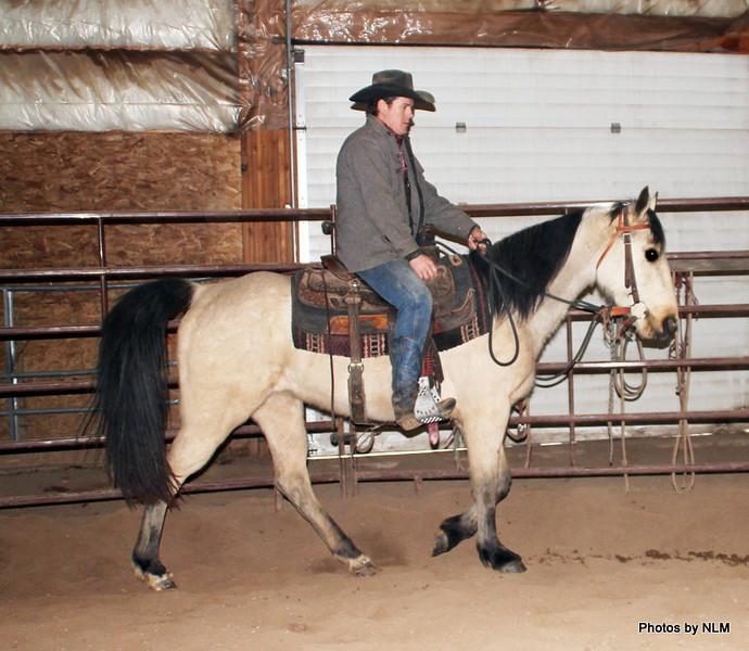 ~Gem~ Mare, Registered Tennessee Walker, 2010 FOR SALE
