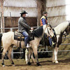 Roy & Gem, both registered Tennessee Walkers Roy is sold. Gem for sale.