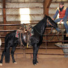 ~Dolly~ Mare, Registered Tennessee Walker, 2006 FOR SALE