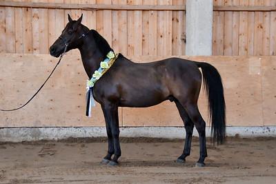Araabia hobuse paev  @ Pallase tall, 14.07.2018 © Triin Laanemagi