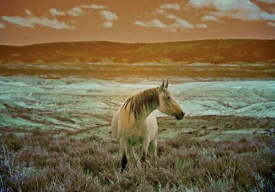 Artsy Wild Mustangs of SWB