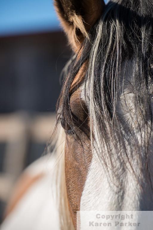 Black Hills Wild Horse Sanctuary 2015