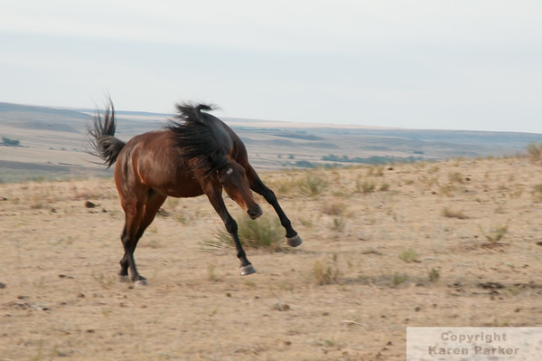 Black Hills Wild Horse Sanctuary - August, 2012