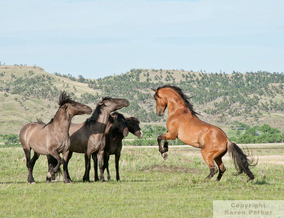 Black Hills Wild Horse Sanctuary - June, 2011