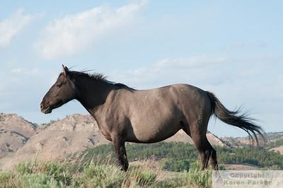 Black Hills Wild Horse Sanctuary - May, 2012