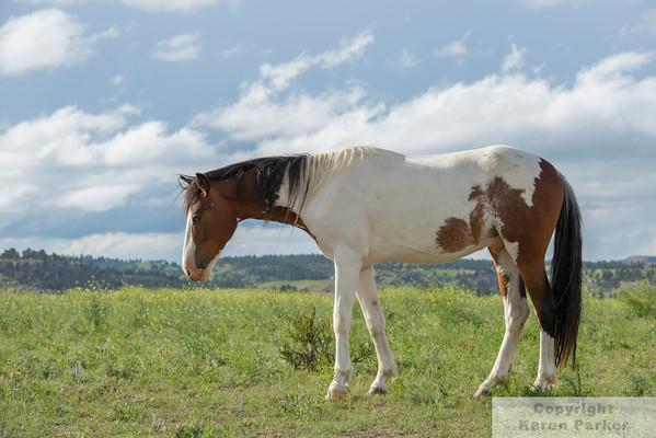Black Hills Wild Horse Sanctuary - June, 2014