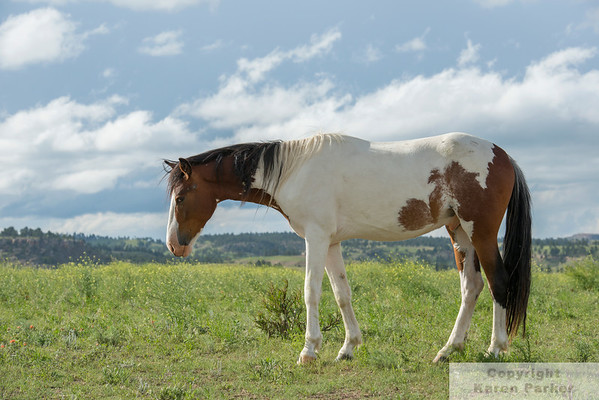 Black Hills Wild Horse Sanctuary - June-October, 2014