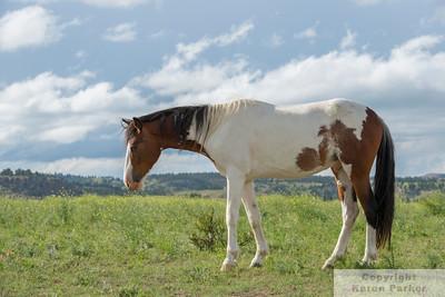 Black Hills Wild Horse Sanctuary - June-October, 2014