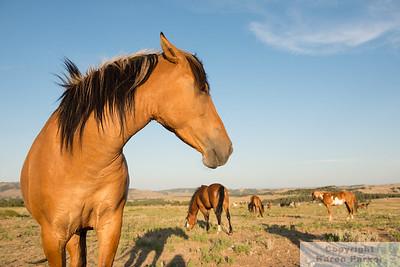 Black Hills Wild Horse Sanctuary 2016