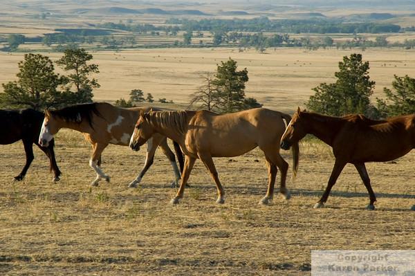 Black Hill Wild Horse Sanctuary - 2007