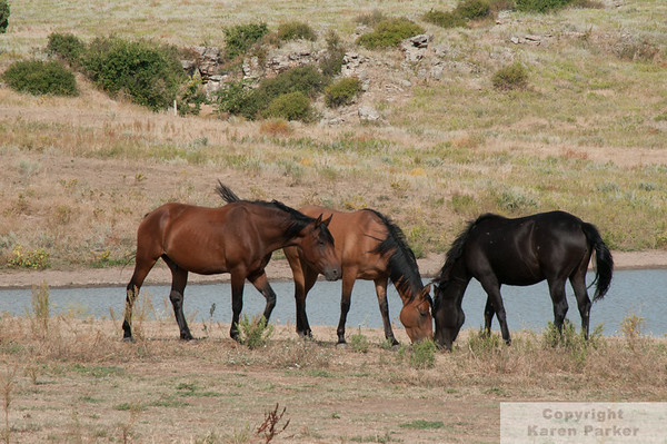 Black Hills Wild Horse Sanctuary - September, 2010