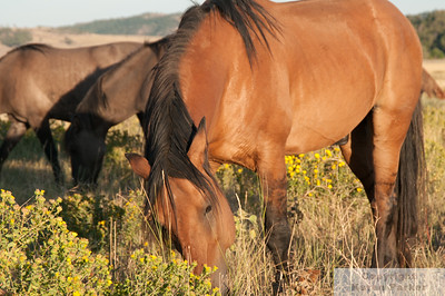 Don Juan's Band 2006-2012 Black Hills Wild Horse Sanctuary