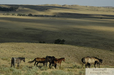 Black Hills Wild Horse Sanctuary - 2007 (Small JPGs Only)