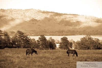 Equine DNA Gold of the Black Hills