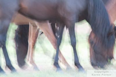 South Dakota Spanish and Wild Horses / Nebraska Grasslands - June/July, 2010