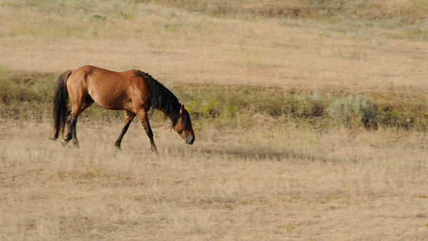 Videos - Black Hills Wild Horse Sanctuary and Spanish Mustangs - June/July and September, 2010