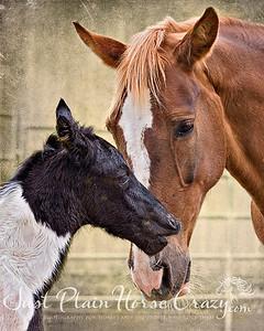 Pandora and Baby (colt born 4/16/11)