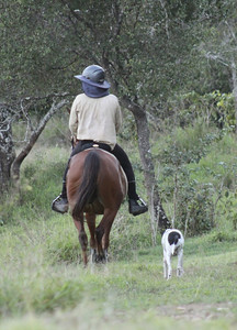 Green broken Alii, with James Christensen riding (at home) in May 2011.