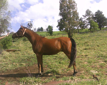 As a youngster, owned by Debbie Cain at the time.