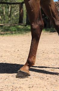 Monty: Legs & feet in January 2018.