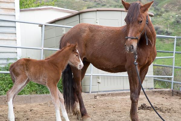 Courtship Ranch Baby