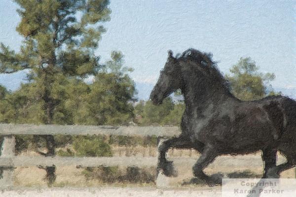 Equine Digital Paintings