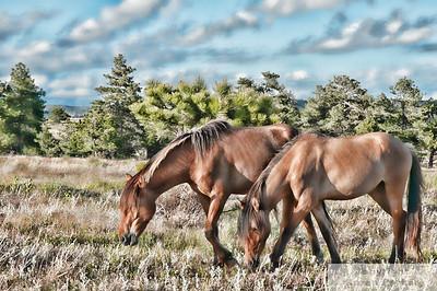 Digital Equine Paintings