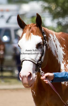 EWHA Horse Show