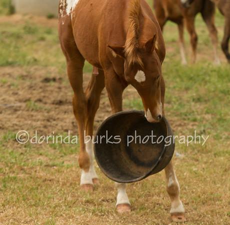 Farm and Ranch Calls