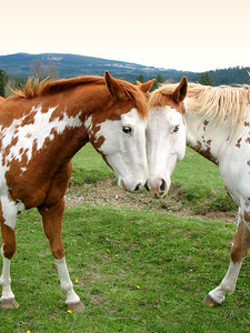 My favorite horse picture. Star and Lisa. Photographer unknown.