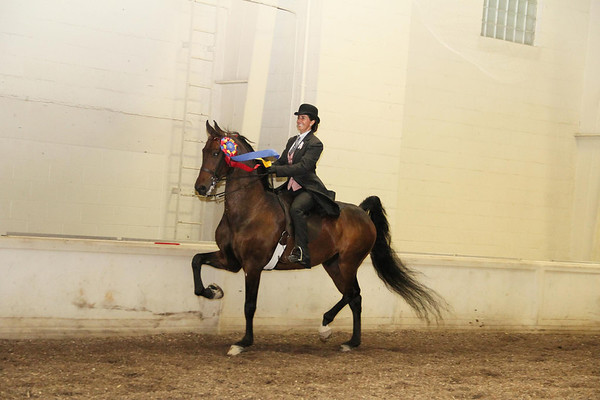 Laura and Heist after winning the Championship award at the 2011 Madison Classic Horse Show.