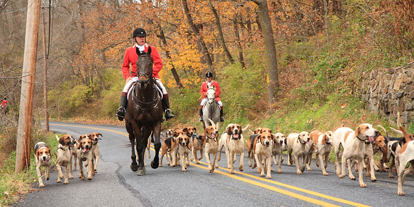 Fox Hunt at Tarad Hill in 2011