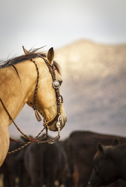 Cowboy Jewelry