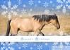 Hannah de Montana - Sulphur Mustang Mare