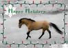 Don Juan, Spanish/Sulphur/Sorraia Mustang Stallion from the Black Hills Wild Horse Sanctuary