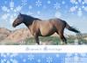 Maricruz - Spanish Mustang Mare