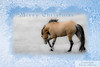 Don Juan, Spanish/Sulphur/Sorraia Mustang Stallion from the Black Hills Wild Horse Sanctuary