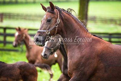 j_rainy+foals-0824