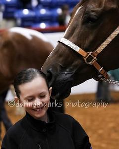 Horse O Rama 2013 Delaney Shanks