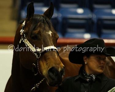 Horse O Rama 2013 K. Koss