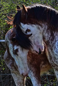 aairon horse farm 733